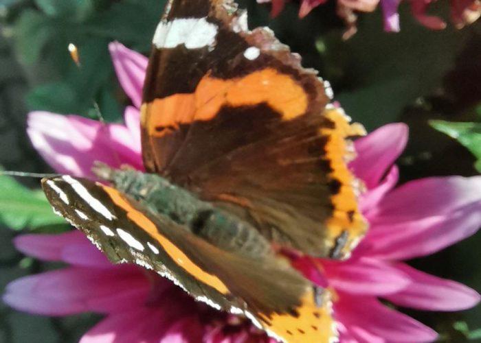 Schmetterling klein1